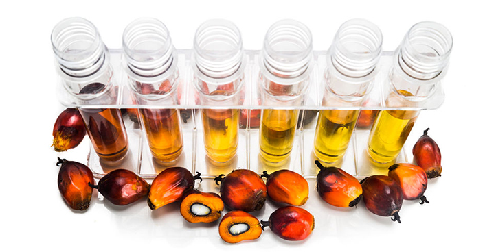 Palm Oil & Biodiesel Industry